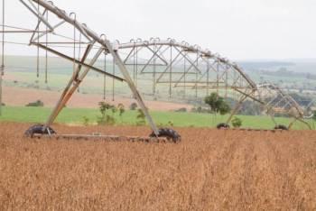 CONAB: Safra recorde de grãos deve chegar a 240,7 milhões de toneladas