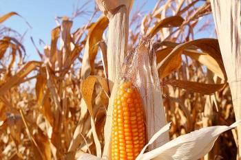 MT segue como maior produtor de grãos do país