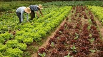 Sancionada, com vetos, lei de apoio à agricultura familiar