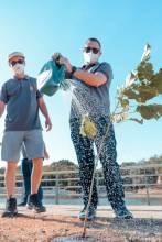 Unicred MT promove o plantio de mil árvores